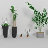 Indoor plants Free 3D model