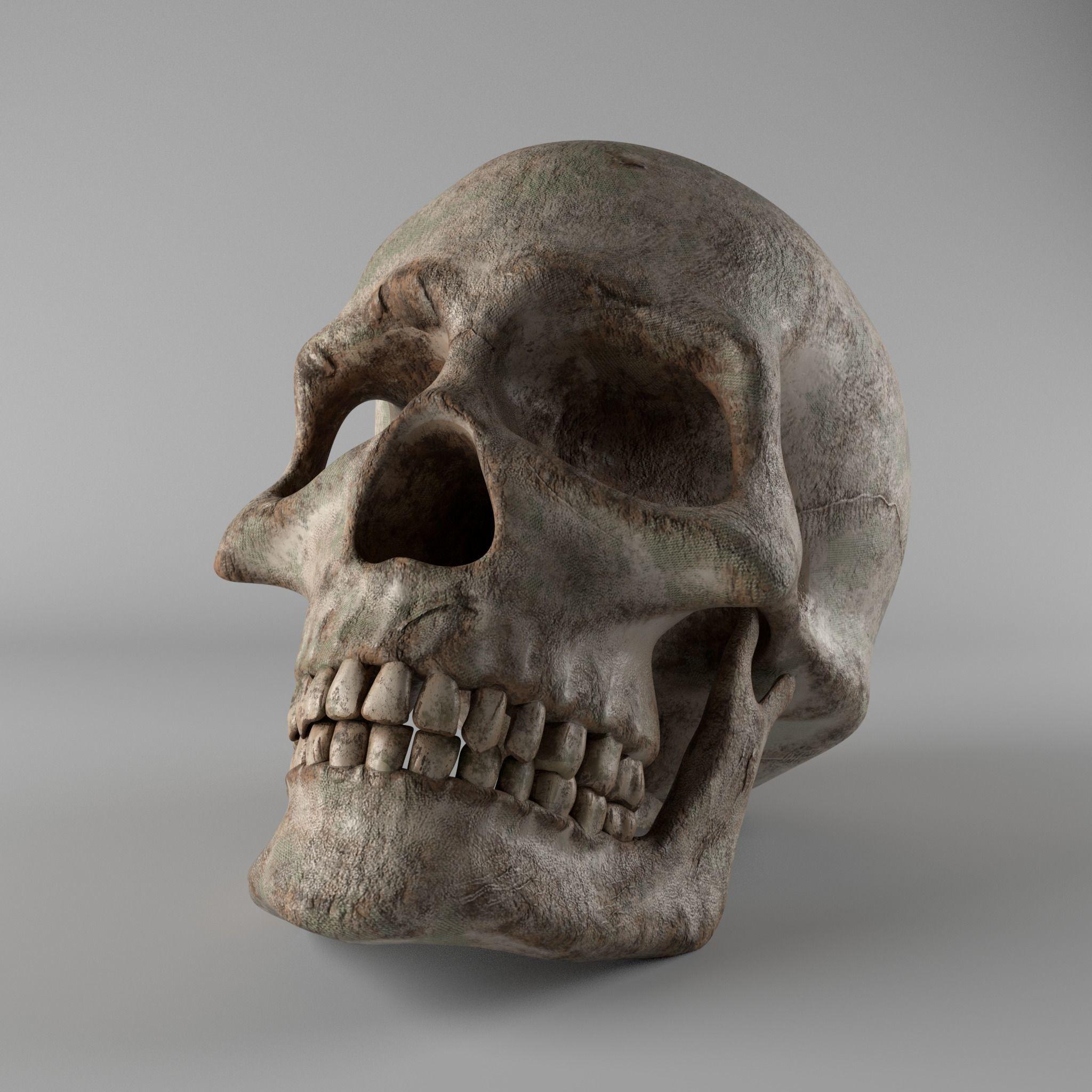 Skull Free 3D model